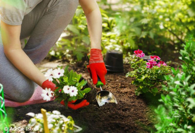 Petits travaux de jardinage à Saujon